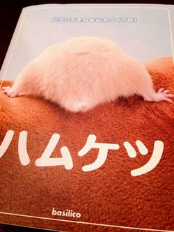 ハムケツ.JPG