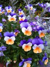 flower0521.jpg