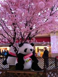 panda_0319.jpg